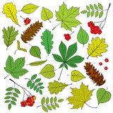 Vector set of different, isolated, detailed outline tree leaves, bunch of ripe Rowan and pine cone on white background. Royalty Free Stock Images