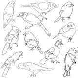 Vector set of different species of birds. Royalty Free Stock Image