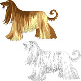Vector Set dog Afghan hound breed Stock Photography