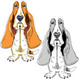 Vector Set dog Basset Hound breed Royalty Free Stock Photo