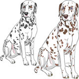 Vector set dog Dalmatian breed sitting. Sketch of the cheerful serious dog Dalmatian breed two different color, one - with black spots and brown eyes, the second Stock Images