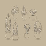 Vector set of doodle house plants in ceramic pots. Stock Image