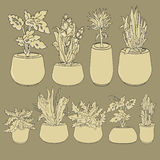 Vector set of doodle house plants in ceramic pots. Royalty Free Stock Photo