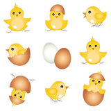 Vector set easter chicks. Vector set with beautiful easter chicks, easter design elements Stock Photos