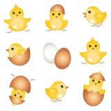 Vector set easter chicks Stock Photos