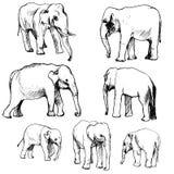 Vector set of elephants Royalty Free Stock Image