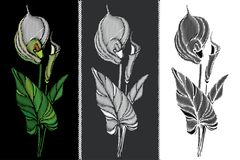 Vector set with embroidery Calla flower in pastel yellow, black and white, bud and leaves isolated. Floral patch with ornate Calla Stock Photos