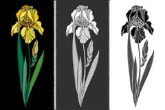 Vector set with embroidery Iris flower in pastel yellow, black and white, bud and leaves isolated. Floral patch with ornate Iris. Stock Images