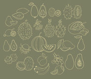 Vector set of exotic fruits Stock Photos