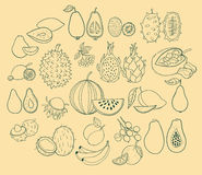 Vector set of exotic fruits. Vector illustration Stock Photo