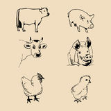 Vector set of farm animals hand sketched illustrations with pig, cow and chicken for meat products logo. Eco food sign. Stock Image