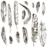Vector set of feathers Stock Images