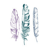 Vector set of feathers Royalty Free Stock Image