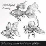 Vector set of filigree drawn goldfish in vintage style Stock Image