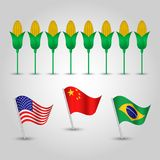 Vector set of flags of states with biggest production of maize and several corn cobs - countries united state. Vector infographics - set of three flags of states Royalty Free Stock Images
