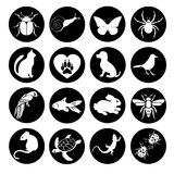Vector set flat web icons animals and insects. Black  white  a round frame for internet, mobile apps, interface design Stock Image