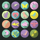 Vector set flat web icons animals and insects. Multicolored  with long shadow in round frame for internet, mobile apps. Vector set flat web icons animals and Royalty Free Stock Images
