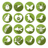 Vector set flat web icons animals and insects. White  with long shadow in round green frame for internet, mobile apps. Vector set flat web icons animals and Royalty Free Stock Image