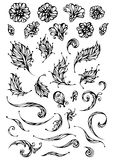 Vector set of floral elements. Ornate flowers and leaves for your design isolated on white background Royalty Free Stock Photo