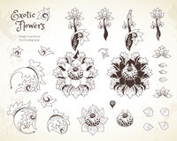 Vector set with flowers in Chinese style. Vector set with fantastic exotic flowers in Chinese style. Luxury ornament. Outline floral illustration. Ornate Royalty Free Stock Photography