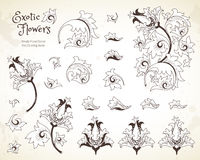 Vector set with flowers in Chinese style. Vector set with fantastic exotic flowers in Chinese style. Luxury ornament. Outline floral illustration. Ornate Royalty Free Stock Images