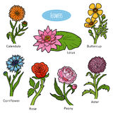 Vector set of flowers, color collection Stock Image