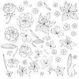 Vector set of flowers and leaves Royalty Free Stock Images