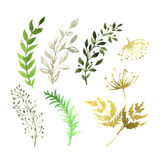 Vector Set of flowers painted in watercolor on. White paper. Sketch of flowers and herbs Stock Images
