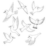 Vector set of flying birds. Hand drawn songbirds, isolated vector elements Royalty Free Stock Photo