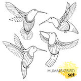 Vector set with flying Hummingbird or Colibri in contour style isolated on white background. Outline small tropical bird. Royalty Free Stock Photo