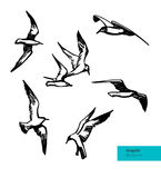 Vector Set of Flying Seagulls Illustration. Stock Photography