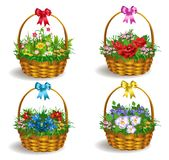 Vector set of four baskets of colorful flowers. Isolated on a white back Royalty Free Stock Photo