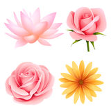 Vector set of four flowers isolated on white. Vector flowers set of rose, lotus, daisy isolated on white vector illustration