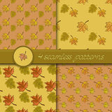 Vector set of four seamless patterns with colored autumn leave Stock Images