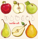 Vector set with fresh apples and pears. Bright vector illustration of fresh apples and pears. Single apple and pear, part of apple and pear, , colored and Stock Photography