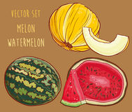 Vector set with fresh melon and watermelon Royalty Free Stock Image
