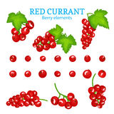 Vector set of a fresh red currant. Berries one by one and groups on branches and leaves. Collection of ripe red currantberry fruits for packaging design of Royalty Free Stock Image