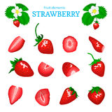 Vector set of a fresh red strawberry. Berry cut, piece of half slice leaves, flower. Collection of ripe strawberry Royalty Free Stock Image