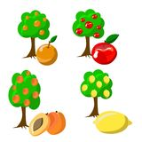 Vector set from fruit trees Royalty Free Stock Images