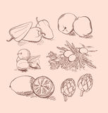Vector set of fruit, vegetables, berries and citrus Stock Photography