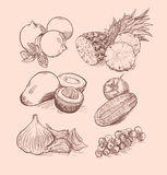 Vector set of fruit, vegetables, berries and citrus Royalty Free Stock Image