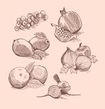 Vector set of fruit, vegetables and berries Royalty Free Stock Photos