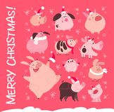 Vector set of funny Christmas flat different pig characters in Santa hat isolated on pink snowy background. vector illustration