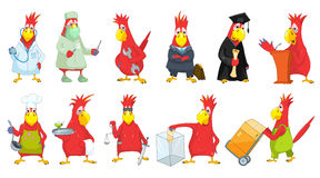 Vector set of funny parrots illustrations. Stock Image