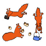 Vector set of funny red squirrels isolated on white background. Set of funny red squirrels isolated on white background. Squirrels with photographic camera Royalty Free Stock Photos