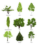Vector set of green garden trees. Nature illustrations isolate on white Royalty Free Stock Photography