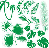 Vector set green leaves Stock Photography