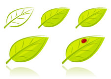 Vector set of green leaves Stock Image
