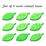 Vector set of 9 green leaves Stock Photos