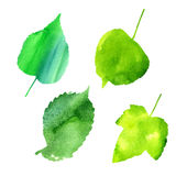 Vector set of green leaves Stock Images
